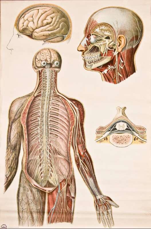 Encantador Historia De La Anatomía Inspiración - Imágenes de ...